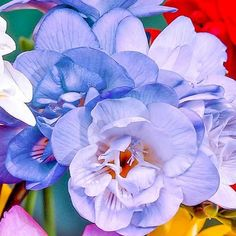 Free jigsaw puzzles online! 🙂 #puzzle #jigsaw #jigsawpuzzles #game #puzzleonline #games #flora #flowers #floristry #petals Flora Flowers, Flower Petals, Puzzle Games For Kids, Flower Pictures, Dream Garden, Cemetery, Shrubs, Bouquet
