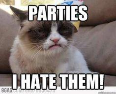 49 ideas funny happy birthday animals grumpy cat for 2019 Grumpy Cats, Grumpy Cat Humor, Funny Cat Memes, Funny Cat Videos, Funny Quotes, Cat Quotes, Life Quotes, Hilarious, Happy Birthday Animals