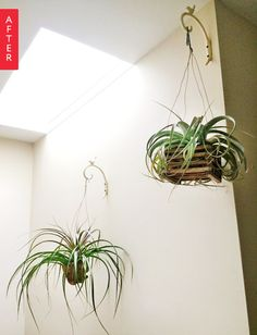 Before & After:  Kimber's Air Plant Weekend Project  — Apartment Therapy Weekend Project