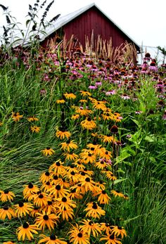 Summer Flowers and Barn Fine Art Photography by hockmanphotography, $25.00