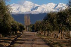 Bodega #Achaval #Ferrer (Luján de Cuyo, #Mendoza)