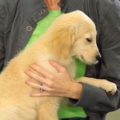 Familiarizing your puppy to being touched is really important for strengthening the bond between you and your puppy.