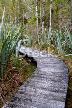 Boardwalk through Harakeke (NZ Flax) & Silver Beech (Nothofagus Menziesii) Royalty Free Stock Photo Images Of Peace, Wooden Path, Deep Photos, The World Race, Beech Tree, Garden Steps, Photography For Sale, Image Now, Ferns