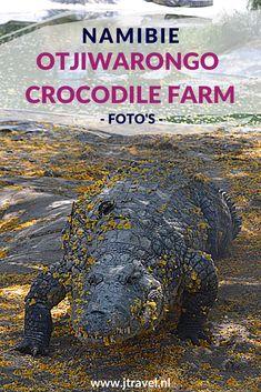 Tijdens een begeleide rondleiding over Otjiwarongo Crocodile Farm komen we meer te weten over de krokodillen die hier op leeftijd in de verschillende hokken en waterbassins leven. Wil je meer foto's zien van Otjiwarongo Crocodile Farm kijk dan hier. Kijk je mee? #otjiwarongocrocodilefarm #krokodillen #otjiwarongo #namibie #jtravel #jtravelblog #fotos