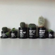 in Lush pot cactus Cacti And Succulents, Cactus Plants, Plants Are Friends, Lush Cosmetics, Aesthetic Rooms, Lush Aesthetic, Cactus Y Suculentas, Boho Diy, Indoor Plants