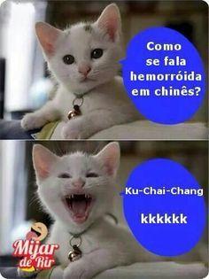 Oh my goodness hahahaha Cat Memes, Dankest Memes, Funny Memes, Jokes, Gato Do Face, 4 Panel Life, Good Humor, Try Not To Laugh, Pranks
