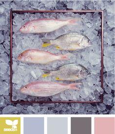 iced hues