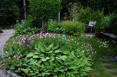 Front garden in july.