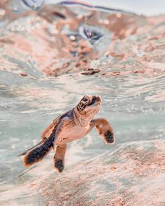 Baby Animals Super Cute, Cute Wild Animals, Baby Animals Pictures, Cute Baby Dogs, Cute Little Animals, Cute Animal Pictures, Cute Funny Animals, Cute Baby Turtles, Sea Turtles