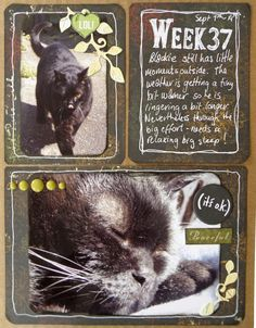 A Teacup of Scrapisms: Cat Lovers Hop Day 3 and Frosty Festivities 2015!