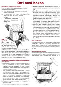 Build an Owl Nest Box - Outdoor Ideas (Kids Wood Crafts Backyards) Owl Nest Box, Bat Box, Bird House Plans, Bird Boxes, Nesting Boxes, Kids Wood, Backyard Birds, Owl House, Wild Birds