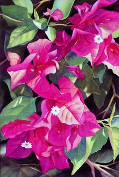 Large Watercolor Painting of Magenta Bougainvillea by sherryroper, $500.00