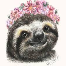 Bildergebnis für sloth faultier