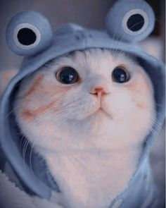 Funny Cute Cats, Cute Baby Cats, Cute Cats And Kittens, Cute Funny Animals, Kittens Cutest, Cute Dogs, Funny Cat Wallpaper, Cute Panda Wallpaper, Cute Cartoon Wallpapers