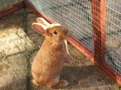 ~ Thrianta Rabbit ~ The type I'm getting!