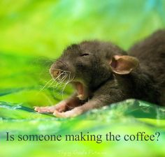 Is someone making the coffee?
