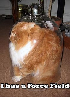 I haz a forcefield