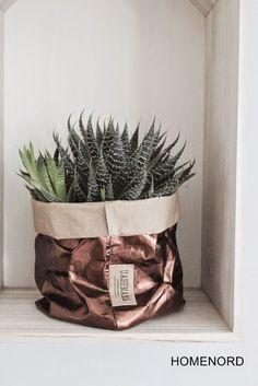 Cactus in mooie bronskleurigeplantenzak.
