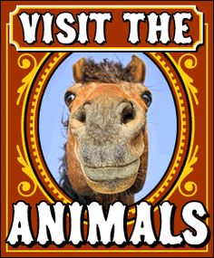 Visit the Animals @ Wheeler Farm FREE :)