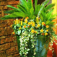Sago palm anchors this composition in a 22- by 24-inch glazed urn. Below it are 'Orange Profusion' zinnias, yellow Pachystachys lutea, and trailing variegated vinca.