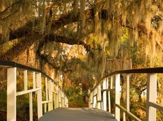 Footbridge, Magnolia Gardens, Charleston, SC