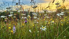 Grüner Kittel, rosige Wirkung – über den therapeutischen Effekt von Biodiversität