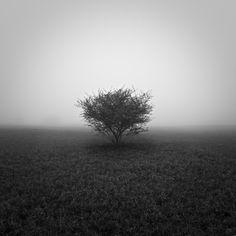 Tree Fog  by Sunny-Delorean