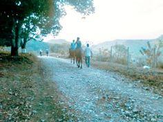 Cabalgata en Veracruz con Cotlamani Back to Nature