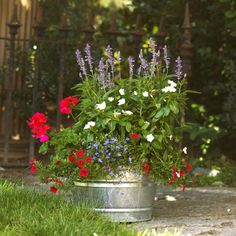 Use a neutral container, such as this galvanized tub, to keep the focus on your colorful floral combo. This tub of sun-loving plants includes 'Overdam' variegated feather reed grass (Calamogrostis acutiflora), Pentas 'Starla Red', 'Titan Pure White' annual vinca, and Salvia 'Mystic Spires Blue'. Since pure blue is hard to come by in the plant world, look for flowers in the blue end of the purple spectrum. Gardening expert Helen Yoest suggests another combination: red hibiscus, blue and black…