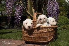 https://flic.kr/p/sSohpG | a basket full of cuteness