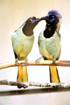 A Little Peck by portillo45