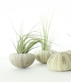 Green Urchin Air Plant Planter with Air Plant | ThriftedandMade on Etsy