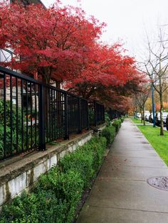 Poco Tri Cities, Sidewalk, City, Walkway, Walkways