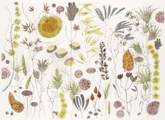 Spanish Seedheads Watercolour by Angie Lewin Art Greeting Card Watercolour Drawings, Watercolor Paintings, Watercolours, Art And Illustration, Beauty Illustrations, Angie Lewin, Artist Sketchbook, Sketchbook Prompts, Stencil Printing