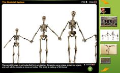 Free Technology for Teachers: Learn Anatomy & Physiology With Study Jams