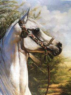mary haggard arabian horse art - Google Search Horse Oil Painting, Horse Paintings, Oil Paintings, Horse Drawings, Animal Drawings, Arabic Horse, Marwari Horses, Horse Sketch, Arabian Art