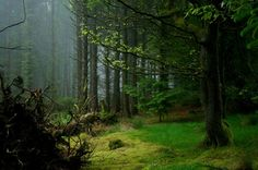 dartmoor forest - Google Search