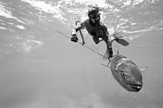 spearfishing by kanoa zimmerman