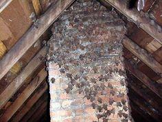 Bats in the attic! Bats In Attic, Hospice Nurse, Birth Mother, Firewood, Wildlife, Dreams, Wood Fuel, Wood Burning