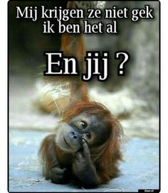 Read 54 from the story grappige plaatjes by wiestietie (wies Vansteenkiste) with 308 reads. Funny Quotes, Funny Memes, Hilarious, Mom Funny, Animal Jokes, Funny Animals, Happy Animals, Foto Fun, Bff
