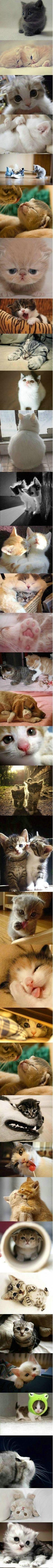 adorable faces!