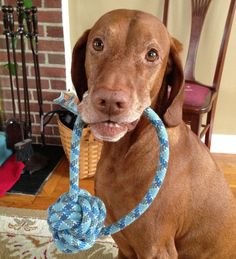 The Carpenter Pointers crew wanted some toys to match their leashes, so here they are finally! Were using dynamic climbing rope to whip Toy Monkey, Climbing Rope, Diy Stuffed Animals, Dog Supplies, Dog Life, Dog Toys, Blue Stripes, Puppy Love, Dog Training