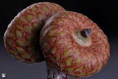 Baby acorn...