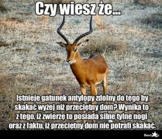 BESTY.pl Wtf Funny, Funny Memes, Polish Memes, Smile Everyday, Sarcastic Humor, Greys Anatomy, Best Memes, Have Time, No Worries