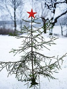 Christmas time is here! Almost but not quite a Charlie Brown Christmas Tree. Christmas Time Is Here, Merry Christmas To All, Noel Christmas, Country Christmas, Winter Christmas, Christmas Crafts, Simple Christmas, Outdoor Christmas, Christmas Tattoo