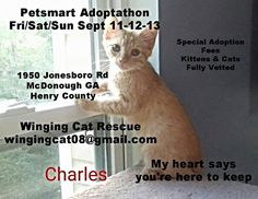 Come See about Me! PETSMART ADOPTATHON WEEKEND FRI/SAT/SUN SEPT 11TH THRU 13TH SPECIAL ADOPTION FEES STARTING $35. 1950 Jonesboro Rd McDonough in Henry County GA - Our kittens & cats are all rescued from your local communities-all are fully vetted-fixed-spayed/neutered, combotested negative/negative, up to date on vaccinations, wormed & given flea preventive & all are microchipped. ALL medical records are on hand w/ each kitten & cat. For more info please contact wingingcat08@gmail.com…