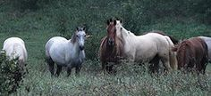 Missouri Horses