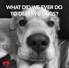 What did we ever do to deserve dogs ?