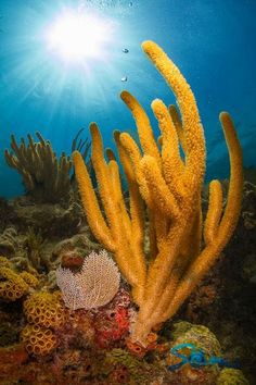 "Biscayne National Park, The only live coral reefs in the United States |  ""Florida's Forgotten Reefs"""