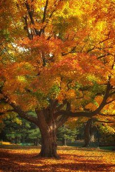 autumn colours / All Fall!!